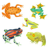 Frog cartoon tropical animal cartoon nature icon funny and isolated mascot character wild funny forest toad amphibian Stock Photography