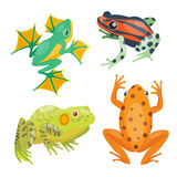 Frog cartoon tropical animal cartoon nature icon funny and isolated mascot character wild funny forest toad amphibian. Vector illustration. Graphic ecosystem Royalty Free Stock Photo