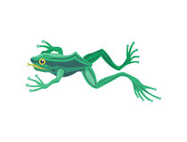 Frog cartoon tropical animal cartoon nature icon funny and isolated mascot character wild funny forest toad amphibian. Vector illustration. Graphic ecosystem royalty free illustration