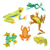 Frog cartoon tropical animal cartoon nature icon funny and mascot character wild funny forest toad amphibian. Vector illustration. Graphic ecosystem croaking stock illustration