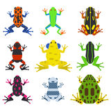 Frog cartoon tropical animals and green nature icons Stock Images