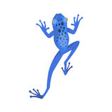 Frog cartoon tropical blue animal cartoon nature icon funny and isolated mascot character wild funny forest toad Royalty Free Stock Images