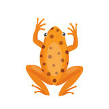 Frog cartoon tropical brown animal cartoon nature icon funny and isolated mascot character wild funny forest toad Royalty Free Stock Images