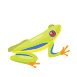 Frog cartoon tropical green animal cartoon nature icon funny and isolated mascot character wild funny forest toad Stock Photography