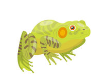 Frog cartoon tropical green animal cartoon nature icon funny and isolated mascot character wild funny forest toad Stock Image