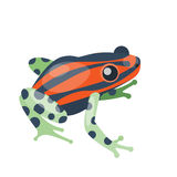 Frog cartoon tropical green red animal cartoon nature icon funny and isolated mascot character wild funny forest toad Stock Images