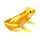 Frog cartoon tropical yellow animal cartoon nature icon funny and  mascot character wild funny forest toad Royalty Free Stock Photography