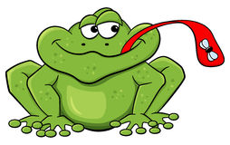 Frog catches fly with his tongue. Vector illustration of a frog who catches a fly with his tongue Stock Images