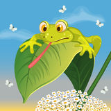 Frog catching  butterfly Royalty Free Stock Images