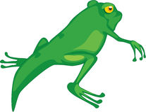 Frog changing Stock Photography