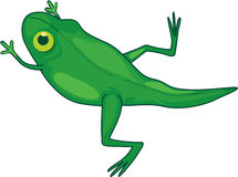 Frog changing Royalty Free Stock Image