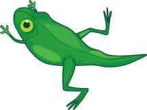 Frog changing Royalty Free Stock Image