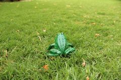 Frog chilling on green grass. Frog chilling green grass animal animals amphibian amphibians camouflage cute nature natural reat rest resting summer spring stock images