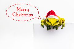 Frog with Christmas hat isolated on white background Stock Images