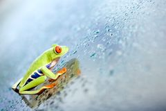 Frog climbing glass royalty free stock photos