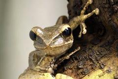 Frog Close-up Stock Photos
