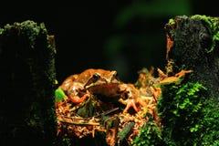 Frog close-up portrait Stock Photo