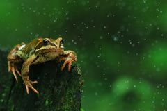 Frog close-up portrait Royalty Free Stock Images