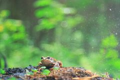 Frog close-up portrait Royalty Free Stock Photos