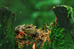 Frog close-up portrait Royalty Free Stock Photography