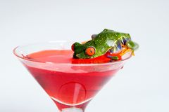 Frog Cocktail. A Red Eyed Tree Frog taking a sip from a martini glass Royalty Free Stock Image