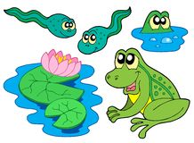 Frog collection. On white background - vector illustration royalty free illustration