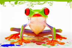 Frog color Royalty Free Stock Image