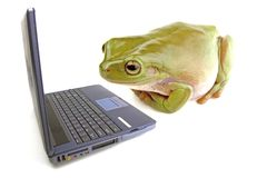 Frog computer Stock Photo