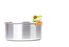 Frog on cooking pot Royalty Free Stock Photo