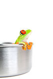 Frog on cooking pot isolated Stock Photos