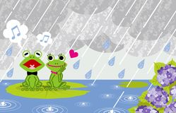 Frog couple in rainy Pond Royalty Free Stock Images