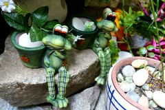 Frog couple Stock Photos