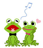 Frog couple, white back Stock Images