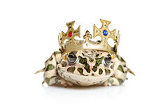 Frog with a crown. Isolated against white background Stock Image