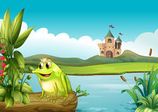 A frog with a crown Stock Photo