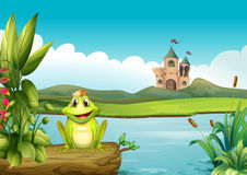 A frog with a crown at the river Stock Images