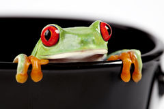 Frog on cup Stock Photography
