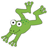 Frog. Cute frog is jumping, on white background stock illustration