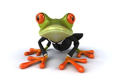 Frog stock video