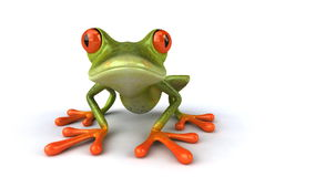 Frog stock footage