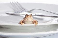 Frog and diner Royalty Free Stock Photo