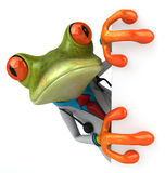 Frog doctor Royalty Free Stock Images