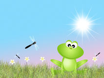 Frog and dragonflies Stock Images