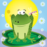 Frog and dragonfly Stock Photography