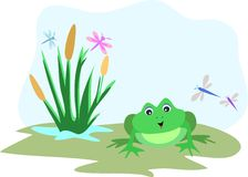 Frog with Dragonfly Sky Frame. Here is an open sky to add your messages, surrounded by a frog, dragonflies, and cattails Royalty Free Stock Photography