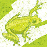 Frog Drawing Stock Images