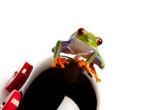 Frog Driver Stock Photo