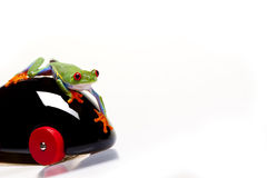 Frog Driving Stock Photography