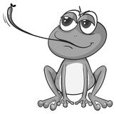 Frog eating Stock Image
