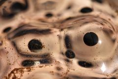 Frog eggs Stock Image